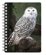 Snow Owl 3D Notebook - $5.23