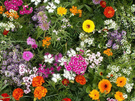 Fragrant Garden Mix Wildflowers Fresh Seed - Flower Seed - Outdoor Living  - $53.00+