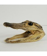 "5"" Real Alligator Gator Head Crocodile Skull Taxidermy + Real Teeth (cq) - $19.80"