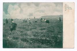 1901-07 Picking Strawberries Near Norfolk VA UDB Black Americana RARE Po... - $10.88