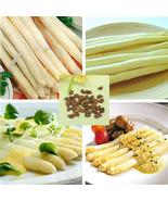 Organic Heirloom RARE 20 Asparagus white Vegetable Perennial Garden Seeds - $2.28