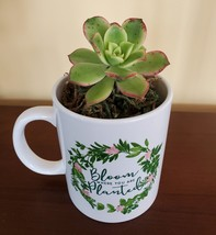 """Succulent in Mug """"Bloom Where You Are Planted"""", ceramic white planter Plant Gift"""