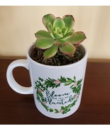 """Succulent in Mug """"Bloom Where You Are Planted"""", ceramic white planter Pl... - $16.99"""