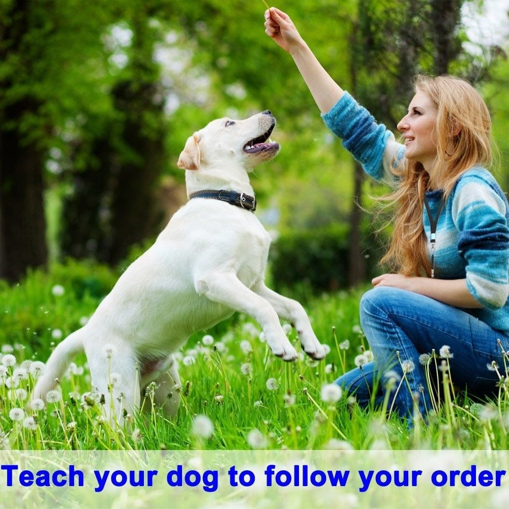 Gamloious 1s Pet Dog Cat Training Obedience Whistle Ultrasonic Supersonic Sound Pitch Quiet Trainning Whistles Pets Supplies