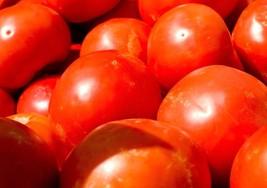 Beefsteak Tomato (Indeterminate) Heirloom Non-GMO Vegetable Garden 180 S... - $9.11