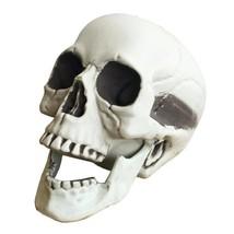 Skeleton Skull Head Life Size Skull Haunted House Horror Halloween Decoration - $17.99