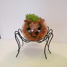 Spider Planter with Succulent, Halloween Pot, Sempervivum, Hens and Chicks image 1