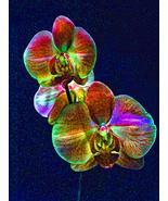 "art Painting, original digital art on canvas ,""Vibrant essence""-Rene Castillo-Ra - $390.00"
