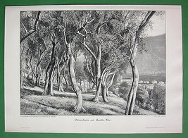 ITALY Olive Groves at Lake Garda - VICTORIAN Era Print - $16.20