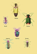 Beetles of America, Britain, Brazil, England and Europe #2 by Sir William Jardin - $19.99+