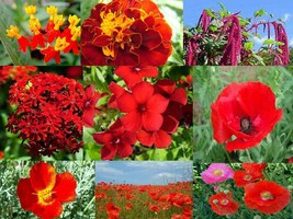 SHIP FROM US 2,200 Radiant Red Wildflower Mix, ZG09 - $19.56