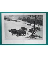 "WILD BOARS Roaming Winter Countryside - Victorian Era Print 14.5"" x 21"" - $25.20"