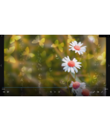 Green Butterfly Background MP4 Video: Bubbles Moving smp2 - $5.00