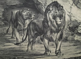 HUNTING 19th Century Tunisia Lions of Oued-Zerga - 1878 Fine Quality Print - $21.60