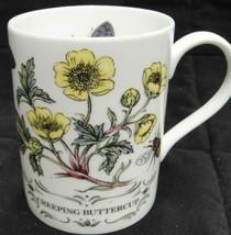 Staffordshire Mug Elizabethan Creeping Buttercup Bone China Botanical Moth - $18.80
