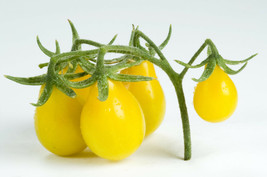 800mg ORGANIC Yellow Pear Tomato Seeds ~240  Seeds Delicious Minis Grape... - $21.99