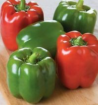 Non GMO Keystone Resistant Sweet Bell Pepper - 25 Seeds - $8.99