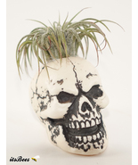 "Mini 2"" Skull Planter - Air Plant, Succulent, Cactus, Haworthia - $10.00"