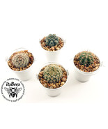 "5 Mini Cactus White Buckets - Assorted Cacti in 2"" Metal Bucket - Weddin... - $20.00"