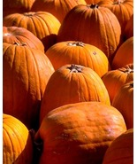 506 PUMPKIN Recipes Collection eBook-Great 4 Holiday - $1.49