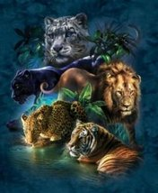 1000 Piece Big Cat Prowess Puzzle - $16.99