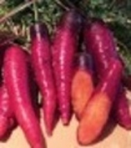 Carrot - Cosmic Purple - Non-Hybrid - Non-GMO - St. Clare Heirloom Seeds - $1.99