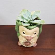 Green Penguin Planter with live Succulent, Echeveria in ceramic Animal Planter image 2