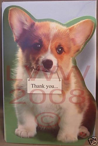 Thank you, sweet #corgi!   Corgi memes, Corgi, Corgi funny  Thank You Cute Corgi Puppy