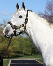 """COLOR PHOTO - UNBRIDLED""""S SONG headshot - $8.00+"""