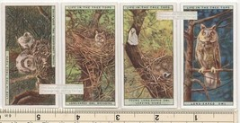 Long Eared Owl Bird and Family Nest FOUR 90+ Y/O Ad Trade Cards 9 - $14.39