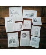 Anatomy Medical Paper Ephemera 1893 Paper Cuts Art Supplies Lot 10 piece... - $8.99