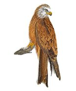 Nature weaved in threads, Amazing Birds Kingdom [Red Kite Perching [Cust... - $16.82