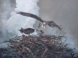 Mort Solberg Yellowstone Osprey S/N Print Eagles with nest - $79.19
