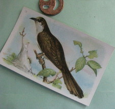 VTG Litho Arm & Hammer Birds of America 5th Series Card No 12 Black Cuckoo - $19.78