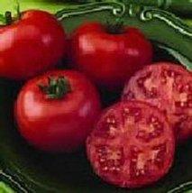 10 Seeds of Bush Champion II Tomato - $26.73