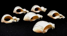 Set of 6 Natural Genuine LUSTROUS Sea Shell Napkin Rings Nautical - $127.99