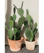 3 Mini Prickly Pear Cactus (live plants) potted - $9.99