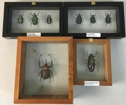 Insect Entomology Lot Collection 36pc Specimen Scorpion Lantern Fly Beetle image 8