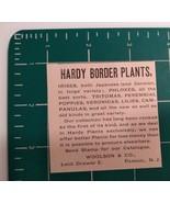 1881 Woolson & Co. - Hardy Border Plants Advertisement Passaic, NJ - $22.00