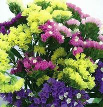 30pcs Very Elegant Mix Midnight Statice Limonium sinuata Flower Seeds IMA1 - $13.99