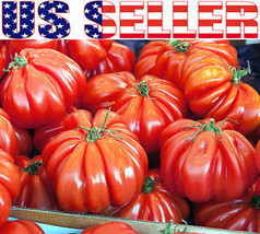 15+ ORGANICALLY GROWN Beauty Lottringa Red Tomato Seeds Heirloom NON-GMO... - $4.29