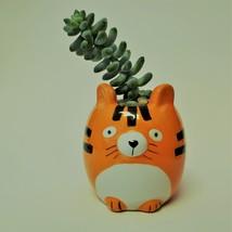 """Donkey's Tail Succulent in Tiger Planter, Sedum Morganianum 2"""" Orange Ceramic"""