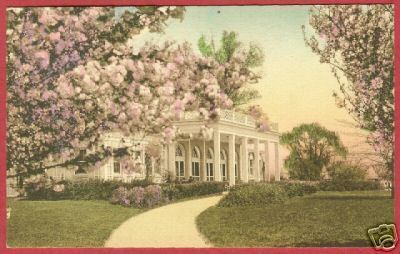 WASHINGTON DC Hains Pt Cherry Blossoms HC Postcard BJs