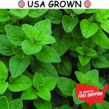 200 mg of Italian Oregano Herb Seeds, Oregano, FREE SHIPPING, NON GMO Seeds - $9.99