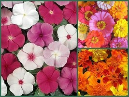 Farm Mix Favorites Special, 3 Full Size Packs, Heirloom Flower Seeds, Colorful! - $17.40