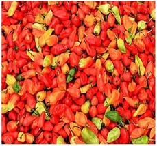 5 Bhut Jolokia Ghost Pepper Seeds - $8.50