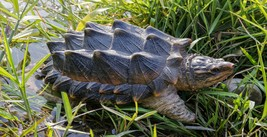 Snapping-Turtle Statue (Hi-Line Exclusive)-Garden Statue, Home Decor - $133.63