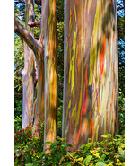 Maui Eucalyptus, Fine Art Photos, Paper, Metal, Canvas Prints - $40.00 - $442.00
