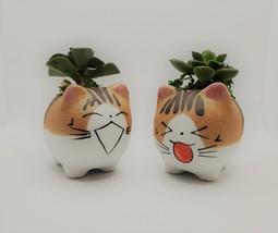 "Echeveria Succulents in Laughing Cat Planters, Live Plants in 2.5"" Kitten Pots"
