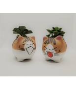 """Echeveria Succulents in Laughing Cat Planters, Live Plants in 2.5"""" Kitte... - $24.99"""